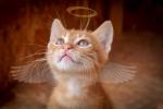 #Kočka #Angel #Vánoce #Křídlo #Kotě #Okouzlující